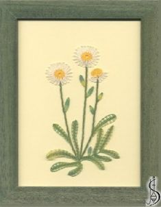 Blossom-aster alpinus No. 10127 Green frame with glass, dimensions 15 x 20 cm, frame selection: yellow, blue, green, red, cinnamon, colored / white lace Price: € 29 ............................ Protected by copyright!