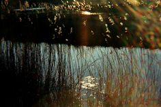 Plastic-camera Diana F+ Fujifilm Superia Extra 35 mm 400.