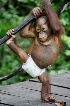38 Cute Animal Pictures to help you get through hump day. - Funny Monkeys - Funny Monkeys meme - - 39 Cute Animal Pictures to help you get through hump day. Baby Animals Pictures, Cute Animal Pictures, Animals And Pets, Cute Monkey Pictures, Monkeys Animals, Wild Animals, Cute Baby Monkey, Pet Monkey, Cute Little Animals