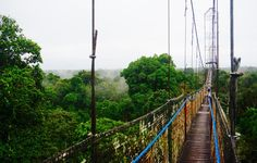 L'un des rares ponts suspendus au monde au-dessus de la canonnée, en Amazonie équatorienne / Canopy walkay, 275m long, 36m high, Ecuadorian Amazon rainforest