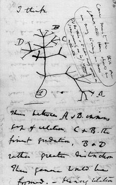 Tree of Life: the first-known sketch by Charles Darwin of an evolutionary tree describing the relationships among groups of organisms.