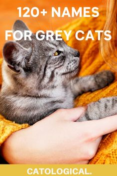 I've compiled a list of 120  names for grey cats. That's right, you'll find tons of cute, funny, pop culture inspired and unique cat names below that go far beyond Mr. or Mrs. Grey. And a bunch of them are also suitable for siblings! #cats #greycats #catnames #catfacts #catblog Unique Cat Names, Great Dog Names, Cute Cat Names, Pet Names, Grey Cat Names, Kitten Names, Grey Cats, White Cats, Cat Info