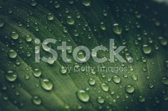 Green leaf with waterdrops royalty-free stock photo