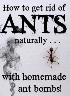How to get rid of ants naturally with homemade ant bombs @jen At Dapperhouse #ants #pest