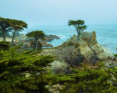 Cypress Point by Sarote Tabcum Jr. on Etsy, $29.95