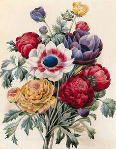 Коллекция картинок: Ботанические картинки