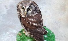 Owl Cafes Are Tokyo's Latest Craze Disgusting!!!