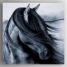 Oil Painting Black Horses Head Hand Painted Canvas with Stretched Framed Ready to Hang 2016 - $87.99