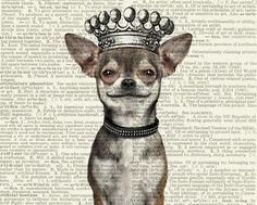 chihuahua print smiling dog with crown printed on by FauxKiss, $10.0 #chihuahua print smiling dog with crown printed on by FauxKiss, $10.00