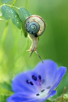 The Snail & the Morning Glory...  <3<3                              …                                                                                                                                                                                 More