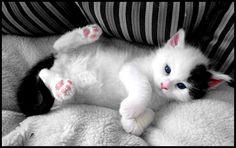 kitten dyingtobejustlikeyou: Boo.