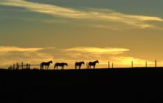 Sunset on the ranch. by digitguys - 800 Horses Photo Contest