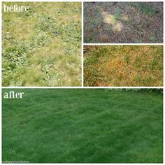 Our before & after lawn makeover project - how we went from a patchy, weedy, lawn in bad shape to a healthy, lush, green lawn with Scotts products.