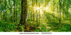 Find Forest Golden Sun Rays stock images in HD and millions of other royalty-free stock photos, illustrations and vectors in the Shutterstock collection. Thousands of new, high-quality pictures added every day. Golden Sun, Sun Rays, Photo Editing, Royalty Free Stock Photos, Illustration, Garden, Room, Pictures, Image