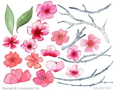 Watercolor Cherry Blossom Graphics by Clipart Brat Graphics on @creativemarket