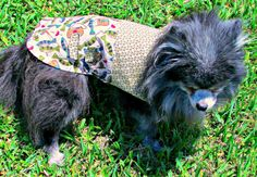 Dog Clothing  Fisherman Toy Breed Coat  by BloomingtailsDogDuds, $23.95