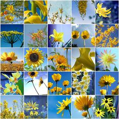 Yellow flowers - some favorites by LHDumes, via Flickr