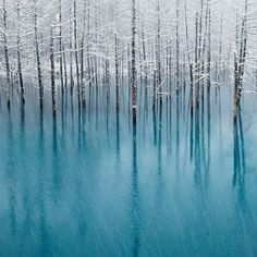 The blue pond is in Biei,Hokkaido,Japan. Photo by by Kent Shiraishi