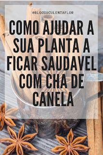 canela em rama anis estrelado Cactus, Green, Plants, Maria Clara, Sim, Gardening, Blog, Indoor Gardening, Succulents Garden