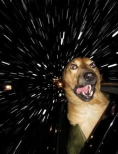 Dogs in space