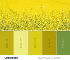 Color Palette Ideas from Rapeseed Canola Yellow Image Mustard Plant, Find Color, Flower Images, Color Shades, Colorful Flowers, Color Palettes, Color Inspiration, Color Combinations, Interior Architecture