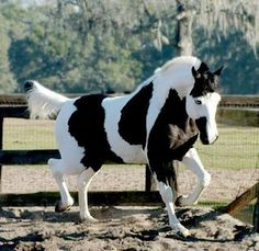 Cavalos pampa - gorgeous!
