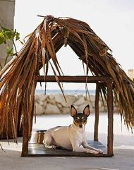 Now Checking In: Pampered Pets by NYTimes.com. More hotels are offering pet accomodations: 61 percent, up from 52 percent in 2010, according to a 2012 survey by the American Hotel & Lodging Association. #Pet_Travel