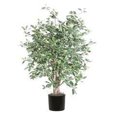 Vickerman 4' Artificial Black Olive Extra Full set in Black Pot ** Click image to review more details.