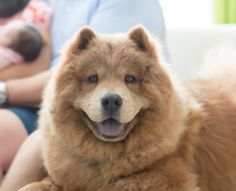 Tulsa dog finalist in People's world's cutest rescue dog contest Barry Switzer, Tulsa World, Rescue Dogs, Dog Pictures, Dog Food Recipes, Dogs And Puppies, Abandoned, Pets, Left Out