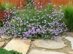 Verbina lilacina 'De la Mina' - one of my favorite california natives Water Wise Landscaping, Front Yard Landscaping, Arizona Gardening, Drought Tolerant Landscape, Xeriscaping, Mediterranean Garden, Native Plants, Trees To Plant, Garden Inspiration