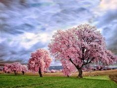 Pink storm by Marta Borreguero on 500px