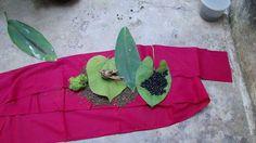 Pankaj Oudhia's Healing Herbs: Diabetes mellitus Type 2 with Gout. HF-737