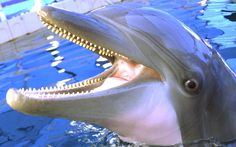 dolphin hd wallpapers 1080p windows