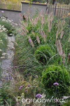 Lawendowy zawrót głowy - strona 770 - Forum ogrodnicze - Ogrodowisko Grasses, Plants, Lawn, Grass, Planters, Herb, Plant, Planting