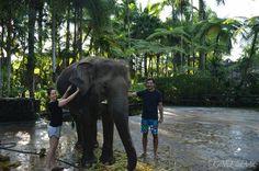 Washing elephants in Bali