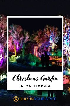 Stroll through a beautiful botanical garden while enjoy Christmas lights in Southern California. This holiday adventure is great for kids and adults alike! Christmas Light Displays, Holiday Lights, Christmas Lights, Holiday Travel, Holiday Fun, South Coast Botanic Garden, Glow Garden, Garden Of Lights, Christmas Garden