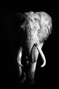 Vintage Elephant as Poster by Wouter Rikken Photo Elephant, Elephant Poster, Elephant Love, Elephant Art, Elephant Tattoos, Elephant Wallpaper, Animal Wallpaper, Elephant Photography, Animal Photography