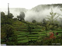 Ooty and Kodaikanal are famous hill stations located in the southern part of India. If you want to experience seclusion and an abundance of nature, then these destinations are meant for you. Some of the famous places to explore are Ooty Lake, Doddabetta Peak, Pillar Rocks, Silver Cascade Falls, etc.