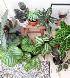 plantes a motifs patterned plants