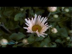 The power of Love - panflute - YouTube
