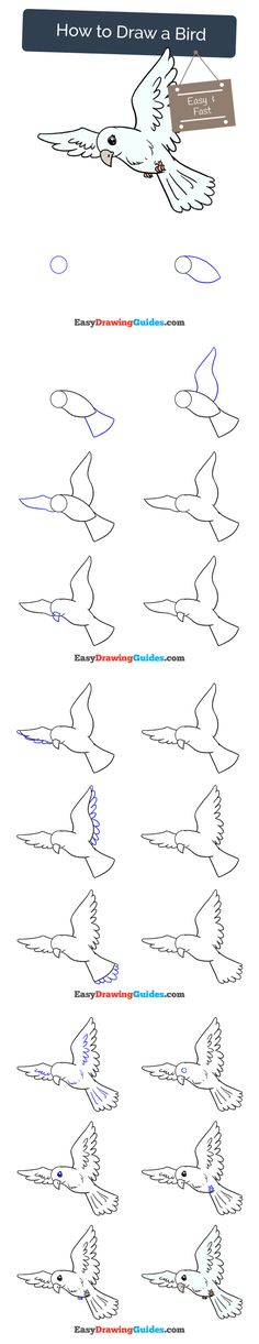 Learn How to Draw a Bird: Easy Step-by-Step Drawing Tutorial for Kids and Beginners. #Bird #drawingtutorial #easydrawing See the full tutorial at https://easydrawingguides.com/how-to-draw-a-bird/.