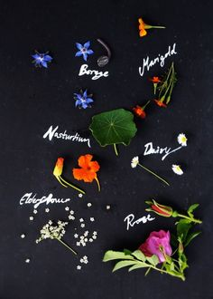 Edible flower guide w nutritional surprises!