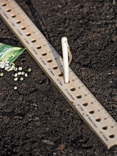 For the Green Thumb: Intervale Seed and Plant Spacing Ruler Vegetable Garden For Beginners, Gardening For Beginners, Gardening Tips, Bucket Gardening, Kitchen Gardening, Gardening Books, Garden Tool Bag, Best Garden Tools, Box Garden
