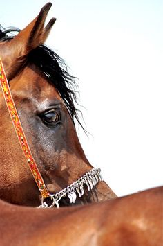"""My treasures do not chink or glitter. They gleam in the sun and neigh in the night."" Bedouin saying"