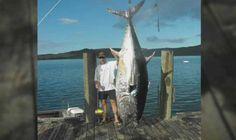 Record mundial de pesca de atún con caña - Sea Monster: Angler's Whopping Tuna Catch
