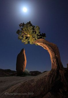 Joshua Tree Leaning Juniper & Balanced Rock by Steve Sieren Photography, via Flickr; Joshua Tree National Park, California