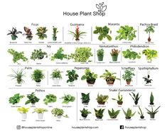 21 Best House Plant Shop images in 2018 | Houseplants, All plants