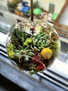 Hanging Succulent Terrarium 6 inch diameter by PrimaryPetals, I have these globes and this is a great idea Hanging Terrarium, Hanging Succulents, Terrarium Plants, Succulent Terrarium, Hanging Plants, Cactus Plants, Indoor Plants, Indoor Herbs, Succulent Arrangements