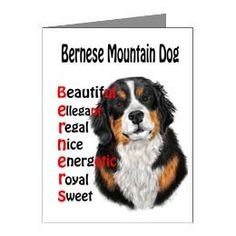 Bernese Mountain Dog ARE Blank Card by TimberPathDogCards on Etsy, $3.50