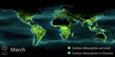 - metrocosmblog:    Beautiful timelapse of photosynthesis seen...